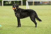 Dog at Horsham Park