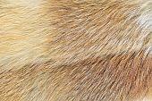 Mink (mustela Lutreola) Fur Background poster