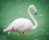 Portrait of a flamingo in lake