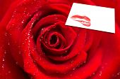 Zoom of red rose with dew drops against white card