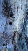 Traces of insects in the tree trunk