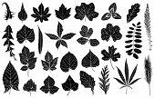 Illustration of different leaves