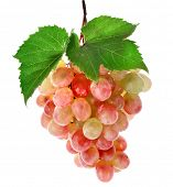 bunch of ripe grapes and green leaves closeup on white background