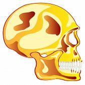 Skull from gild in profile