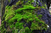 The moss on the tree