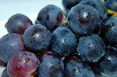 clammy grapes