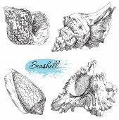stock photo of scallop shell  - Beauty set of various sea shells vector - JPG