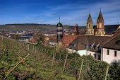 Wurzburg Vineyard