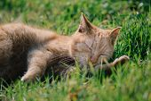 Sleeping cat. Cute cat relaxing in grass. poster