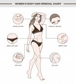 Infographic With European Woman And Body Hair Removal Chart. Illustration With Delicate Outline And  poster