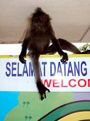 Monkey On Welcome Sign Malaysia poster