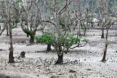 trees in bako national park,borneo malaysia