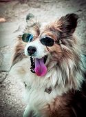 Cool Dog In Mirrored Sunglasses On A Sunny Day. Funny Retro Dog Wearing Sunglasses. Portrait Dog Ton poster
