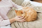 pets, hygge and people concept - close up of female owner with red tabby cat in bed at home poster