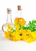 Постер, плакат: Бутылка масла с цветком рапса