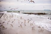 Seascape. Old Stone Pier With Sitting Standing Seagulls And Blue Sea Water.seascape. Old Stone Pier  poster