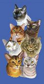 Vertical Postcard With Portraits Of Cats Breeds (abyssinian; Bengal; Burmese; Egyptian Mau; Maine Co poster