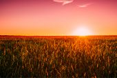 Meadow Grass In Yellow Sunlight At Later Summer Or Early Autumn Season On Bright Sun At Horizon On B poster