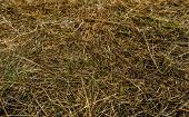 Dry Grass Texture Background. Green Grass And Dry Grass. Grass Perspective. Abstract Nature Backgrou poster