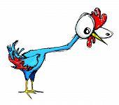 Clueless chicken