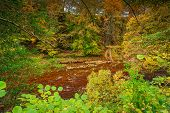 Autumn At River Allen In Allen Banks, And Staward Gorge In The English County Of Northumberland Whic poster