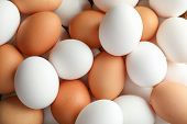 Many Chicken Eggs As Background, Space For Text poster
