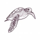 Cute Cartoon Turtle Vector Illustration. Cartoon Animal Turtle Isolated On Background. Sea Turtle, B poster