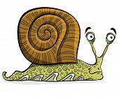 Funny cartoon snail, vector.