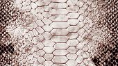 Genuine Grey Reptile Skin Leather Texture Background. Macro Photo poster
