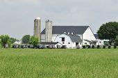 Amish Buggies Gathering