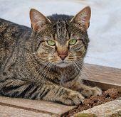 Street Homeless Cat. Homeless Stray Cat On  Street. Wild Kitten Outdoor. poster