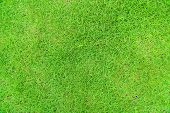 Green Grass Texture Background, Green Lawn, Backyard For Background, Grass Texture, Green Lawn Deskt poster