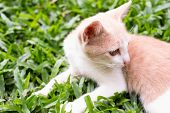 The Golden Cat Is Playing On The Grass. The Cat Turns To The Right. There Is Space For Entering Text poster