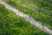 Soccer Pitch White Line. Grass Football Field. Close Up Of Sports Grass Venue poster