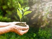 Old Wrinkled Hands Holding A Green Young Plant And Earthy Handful In Sunlight, Blurred Green Backgro poster
