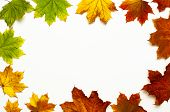Autumn Composition. Frame From Multicolored Green Yellow Red Maple Leaves Isolated On White Backgrou poster