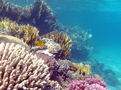 colorful coral reef with hard corals at the bottom of tropical sea