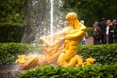 PETERHOF, RUSSIA - JULY 1: Samson - the central fountain palace and park ensemble �?�?�?�«Peterhof�?�?�?�», May 1, 2012 in Peterhof, Russia. Fountain monument was erected in 1735, jet beats up to 31 meters.