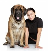 foto of english-mastiff  - A pretty young girl with a large dog sits on white background - JPG