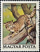 A stamp printed in Hungary shows Wild cat Felis silvestris