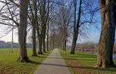 Tree avenue path, The Groe Builth Wells Wales UK.
