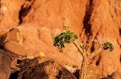 Plant Struggling In Desert