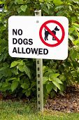 Постер, плакат: No Dogs Allowed Sign