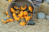 bucket with golden gourds
