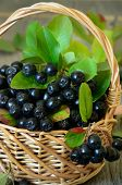 stock photo of chokeberry  - Black chokeberry in the basket on wooden table - JPG