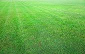 Fresh Green Grass Field Background Texture
