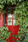 Red Door And Green Vine