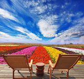 Very beautiful bright colorful flower fields. Commercial cultivation of flowers for sale abroad. At
