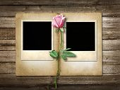 Polaroid-style Photo On The Wooden Background With Pink  Rose