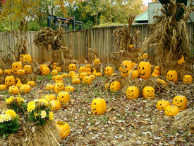 stock photo of jack-o-laterns-jack-o-latern  - An autumn field of jack - JPG